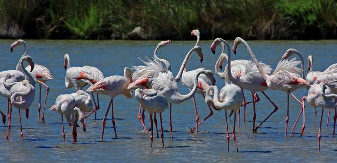 Flamingos_1Cam (1)